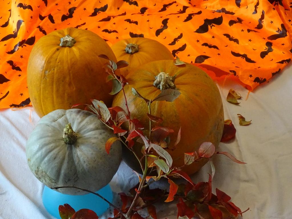 Pumpkins, halloween material with bat prints