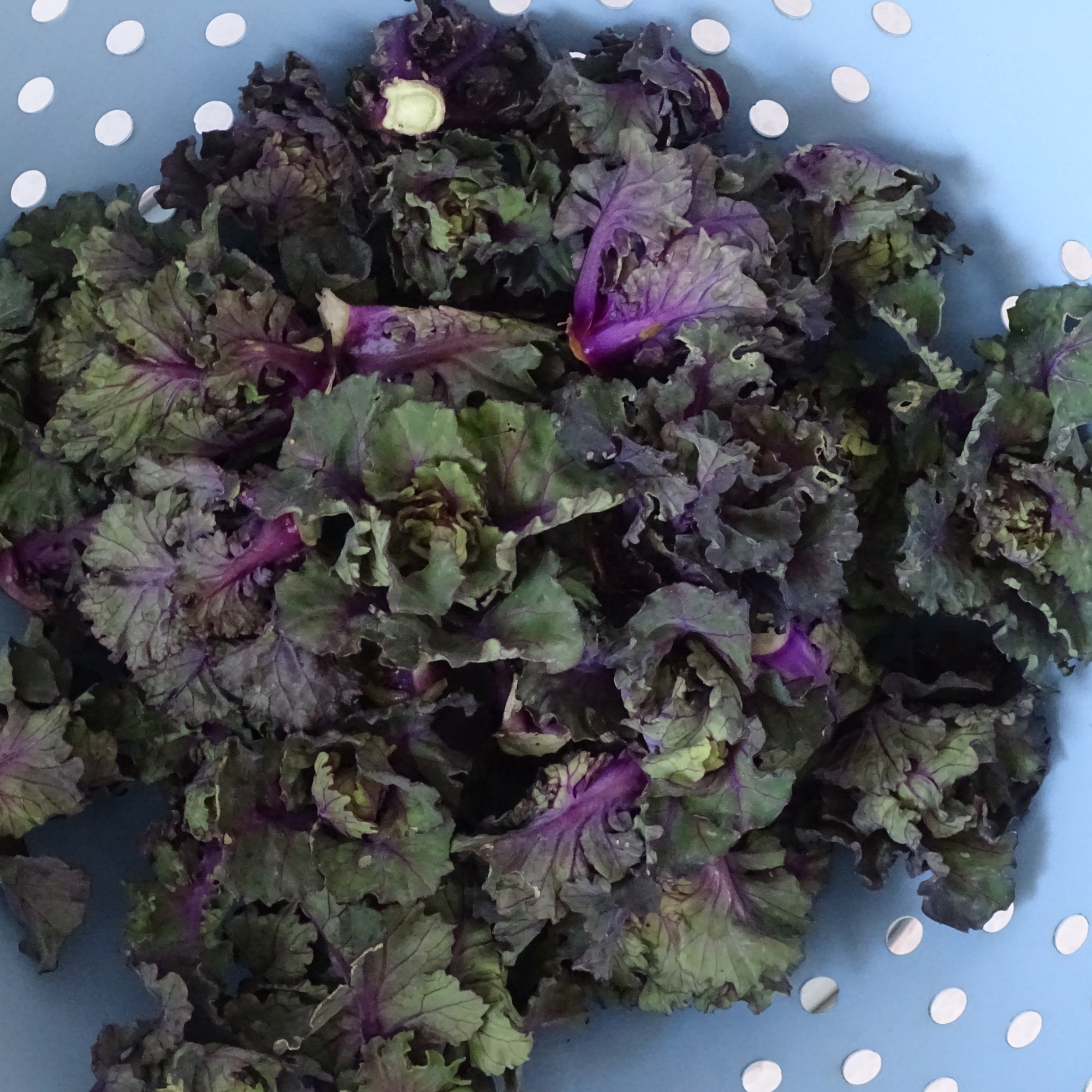 Bowl of flower sprouts
