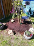 Planting some wildflowers with the apple & pear tree