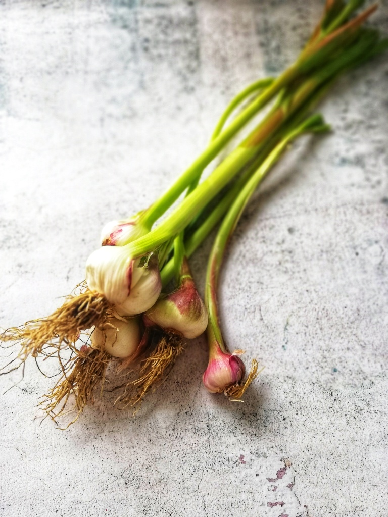 Food photography, Brunch of wet garlic, green and purple hues, long stalks.